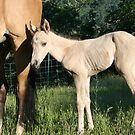 Baby Magnum quarter horse by SKNickel