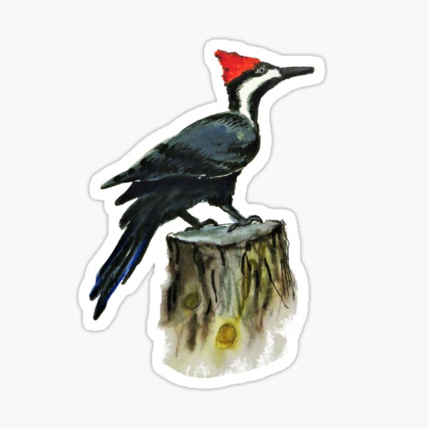 Pileated Woodpecker in Watercolor Sticker