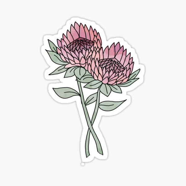 Protea flower - flower illustration, protea sticker, protea flower, protea floral, watercolor Sticker