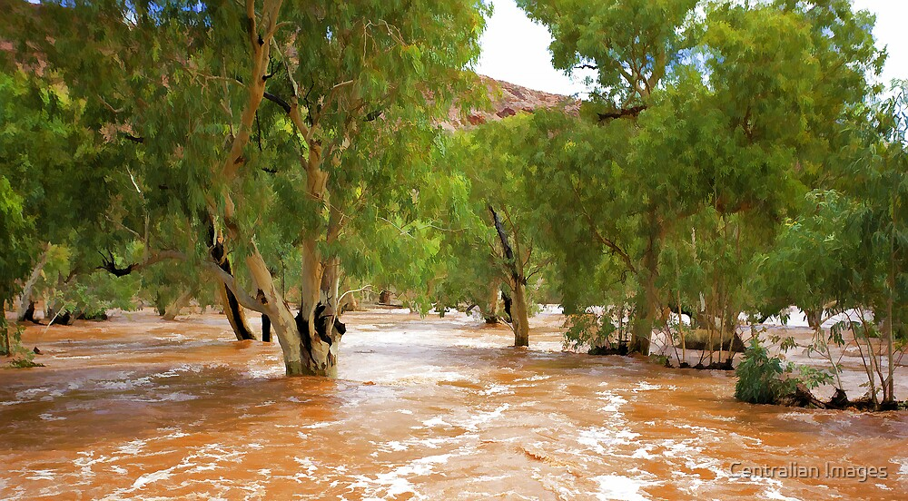 An Outback River by Centralian Images
