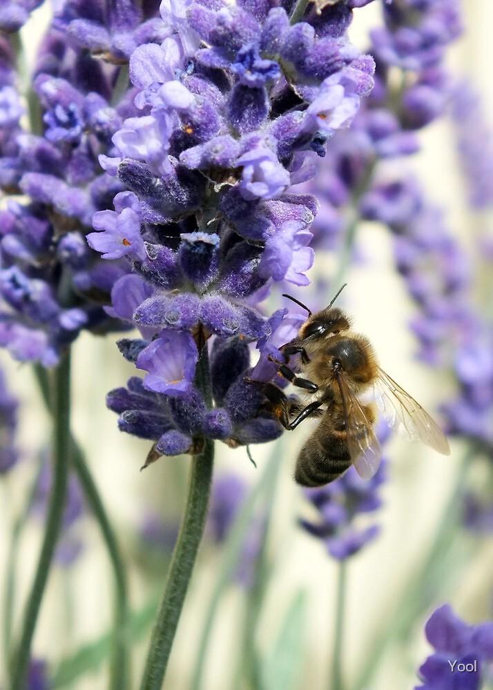 Bee nice ... by Yool