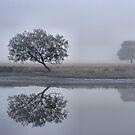 Foggy Reflections - Bedlam Creek NSW by Bev Woodman