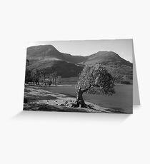 Black&White Tree, Buttermere Lake UK. Greeting Card