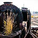 Rust and Life  by David  Preston