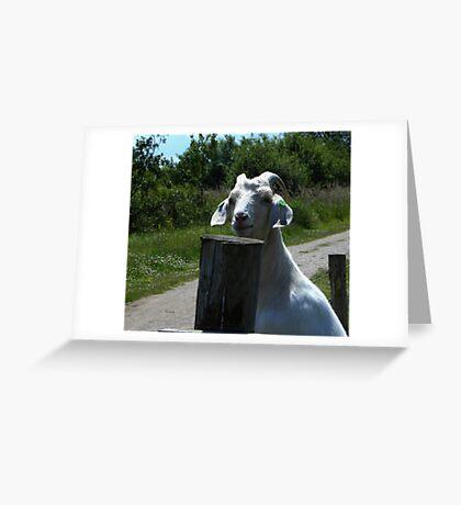 Hello-I'm Bill Greeting Card