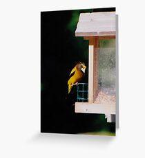 Evening Grosbeak Greeting Card