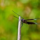 Dragon Fly by Phillip M. Burrow