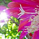 Walking on Sunshine by Farah  Rose