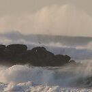 Pacific Ocean Mist by Sarah Trent