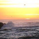 Pacific Ocean Sunset by Sarah Trent