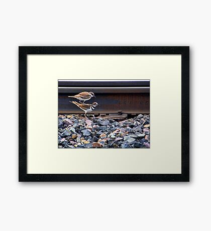 Love in the Afternoon Framed Print