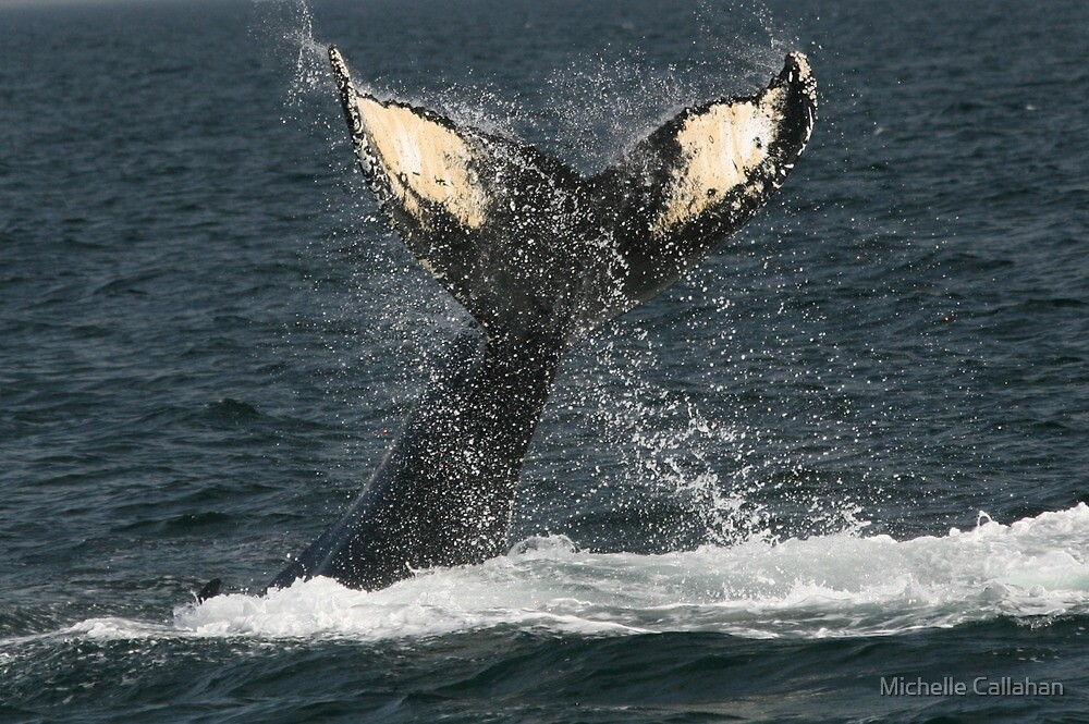 Whale's Tail by Michelle Callahan