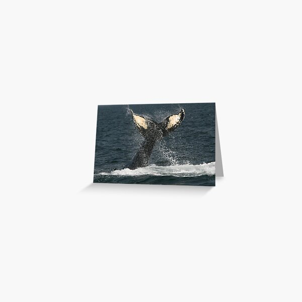 Whale's Tail Greeting Card