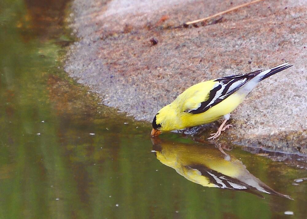 At the Waterhole by Carl Olsen