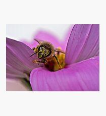 Pollen-ated Photographic Print