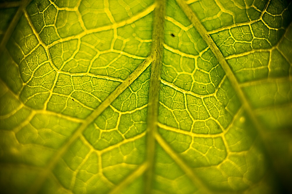 Green Veins by Matthew Osier