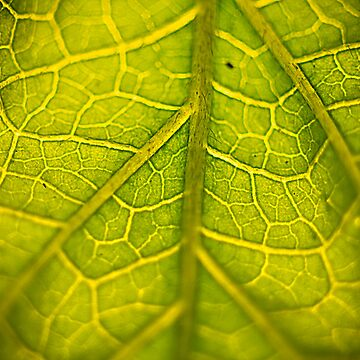 Green Veins by RFotographique