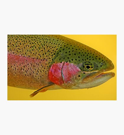Western Oregon Rainbow Trout Photographic Print