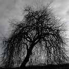 Weeping Willow by Nick Boren