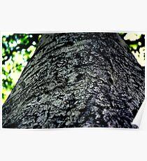 """TREE"" Poster"