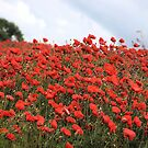 Field Of Red by Lindamell