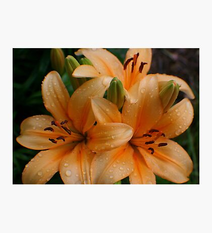 Lily Drops Photographic Print
