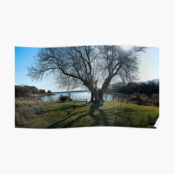 Tree by the Bench Poster