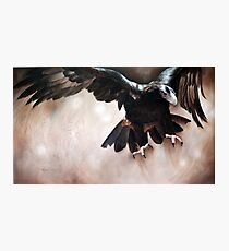 """Alight - The Wedge-tailed Eagle"" Photographic Print"