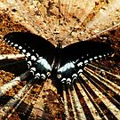 Flight - Butterfly with Speed Effects by Kevin  Whitaker