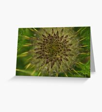 New thistle Greeting Card