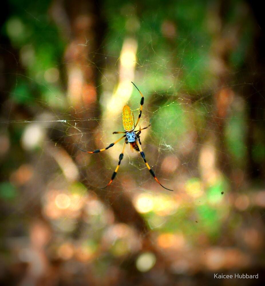 Banana Spider by Kaicee Hubbard