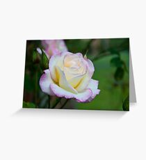 Tears of a Rose  Greeting Card