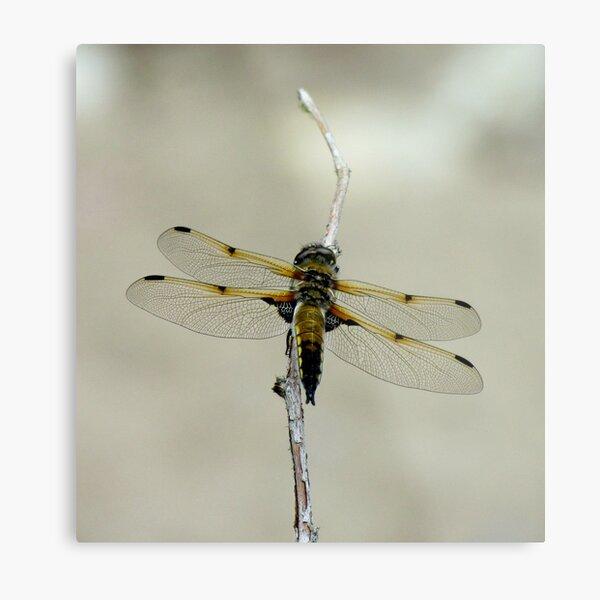 Dragonfly III Metal Print
