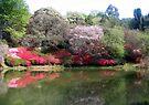 Cheerio Gardens by Elizabeth Kendall