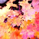 Autumn in Milan by andreaminerdo