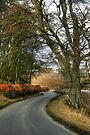 A Country Lane in Winter by Christine Smith
