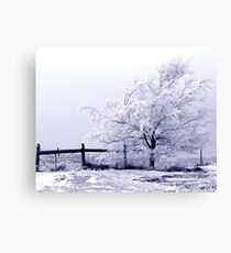 Frost covered tree with fence Canvas Print