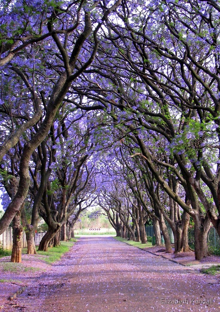 It is purple in Cullinan by Elizabeth Kendall