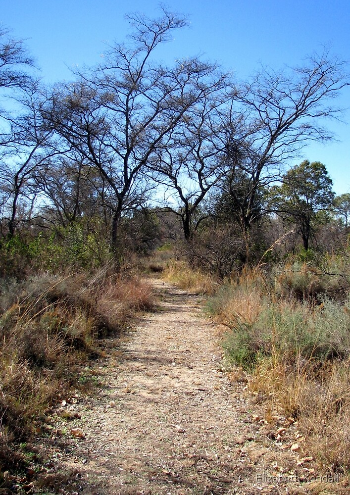 Footpath in the Bushveld by Elizabeth Kendall