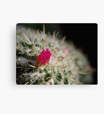 Pink flowering cactus Canvas Print