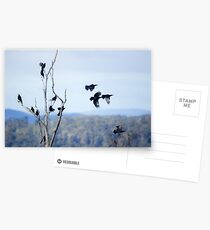 Currawongs  Postcards