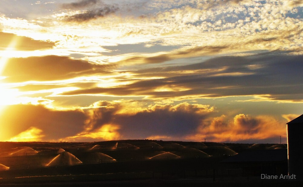 Sprinklers by Sunset by Diane Arndt