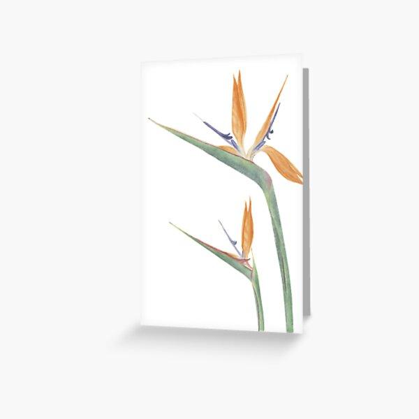 Strelitzia reginae Greeting Card
