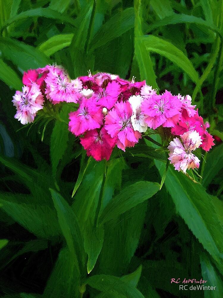 Pink Willie by RC deWinter