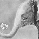 Daizy - Asian Elephant Calf by Heather Ward