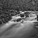 Pencil Pine Creek B/W by Patrick Reid