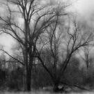 A Winter Calm by MLabuda
