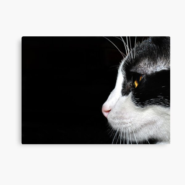 """"""" Paying attention """" Canvas Print"""