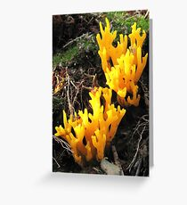 Staghorn Greeting Card