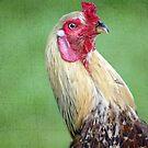 Palmerston Rooster by Jenny Dean